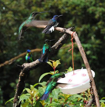 hummingbird-garden-santos-area