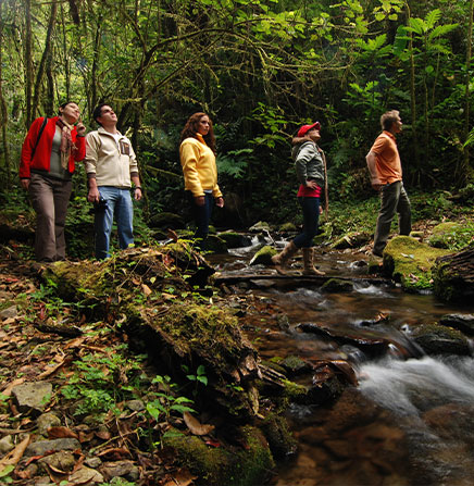 Guided-Walking-Tour-Monteverde-Cloud-Forest-Reserve