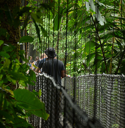 nature-walk-hanging-bridges-arenal-volcano